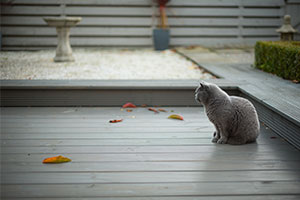 cat on decking in garden